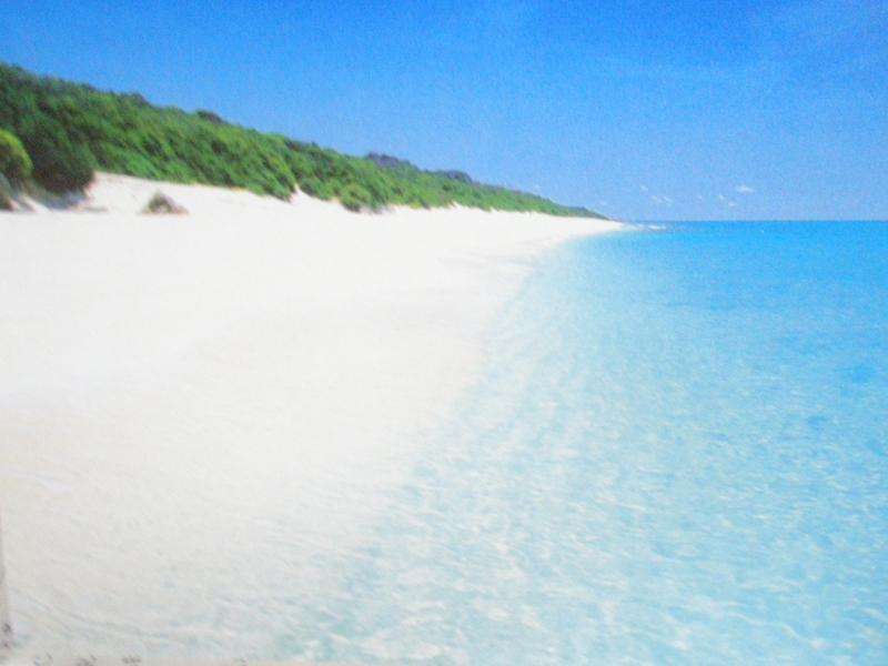 島は夏s001.jpg