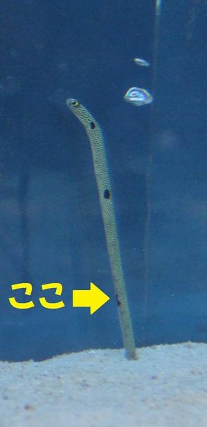 IMG_2270.JPGのサムネイル画像