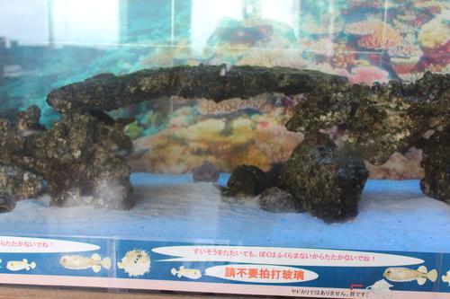 http://miyakojima-kaichukoen.com/blog/assets_c/2018/08/hugu1-thumb-500x333-1334-thumb-500x333-1335.jpg