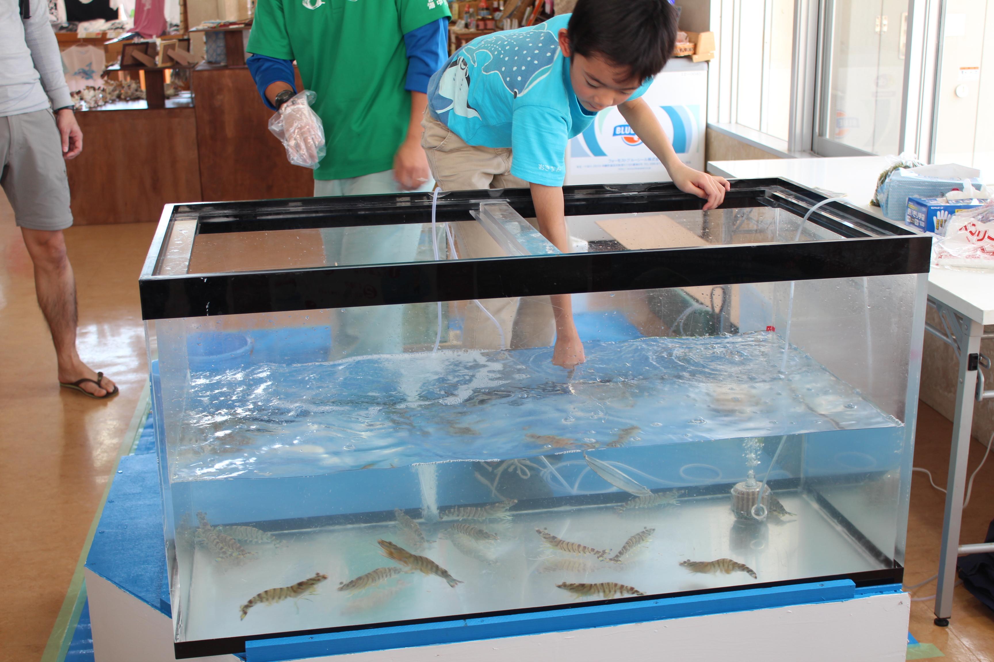 http://miyakojima-kaichukoen.com/blog/upload_images/IMG_9094.JPG
