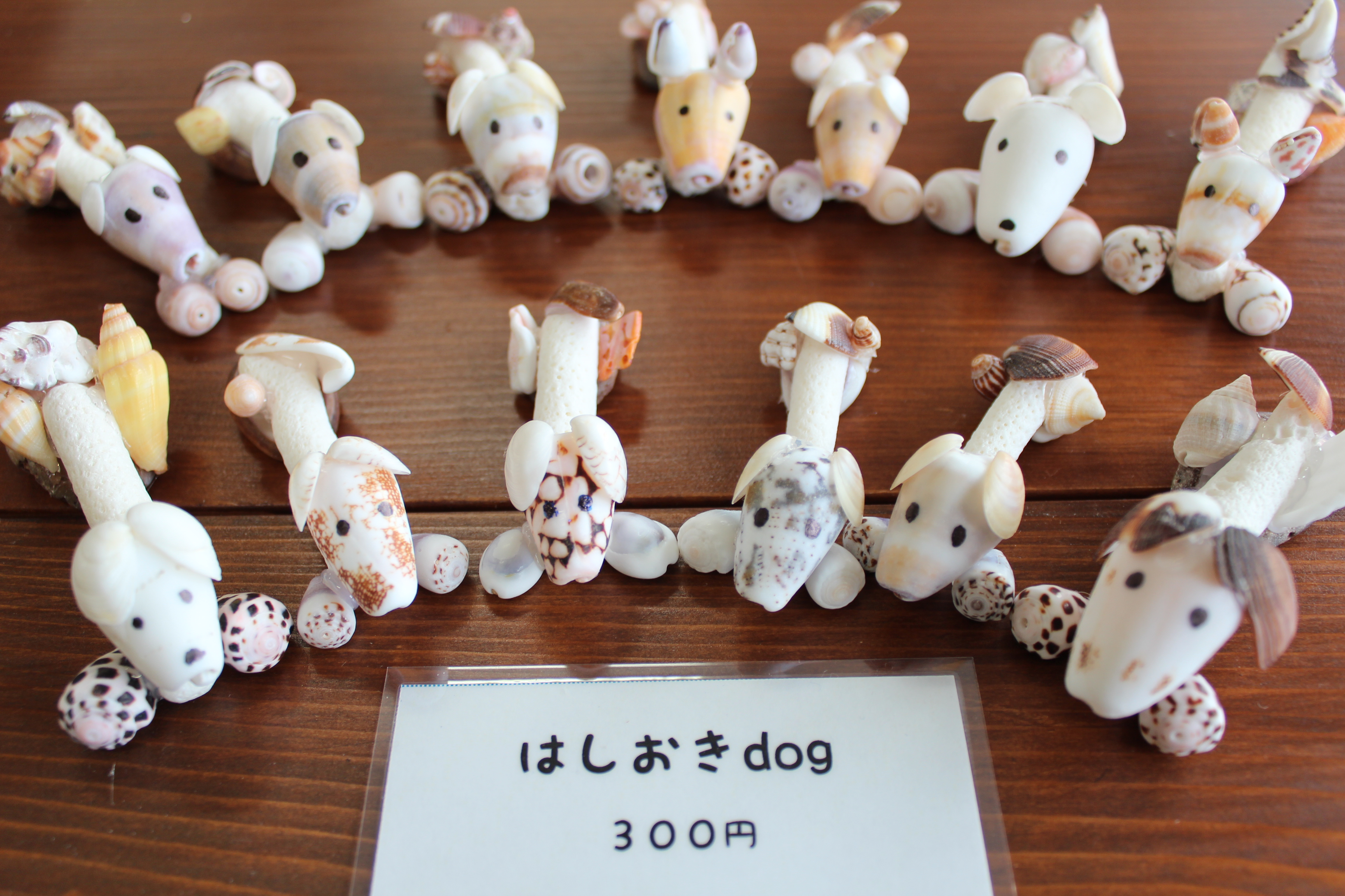 http://miyakojima-kaichukoen.com/blog/upload_images/IMG_9344.JPG