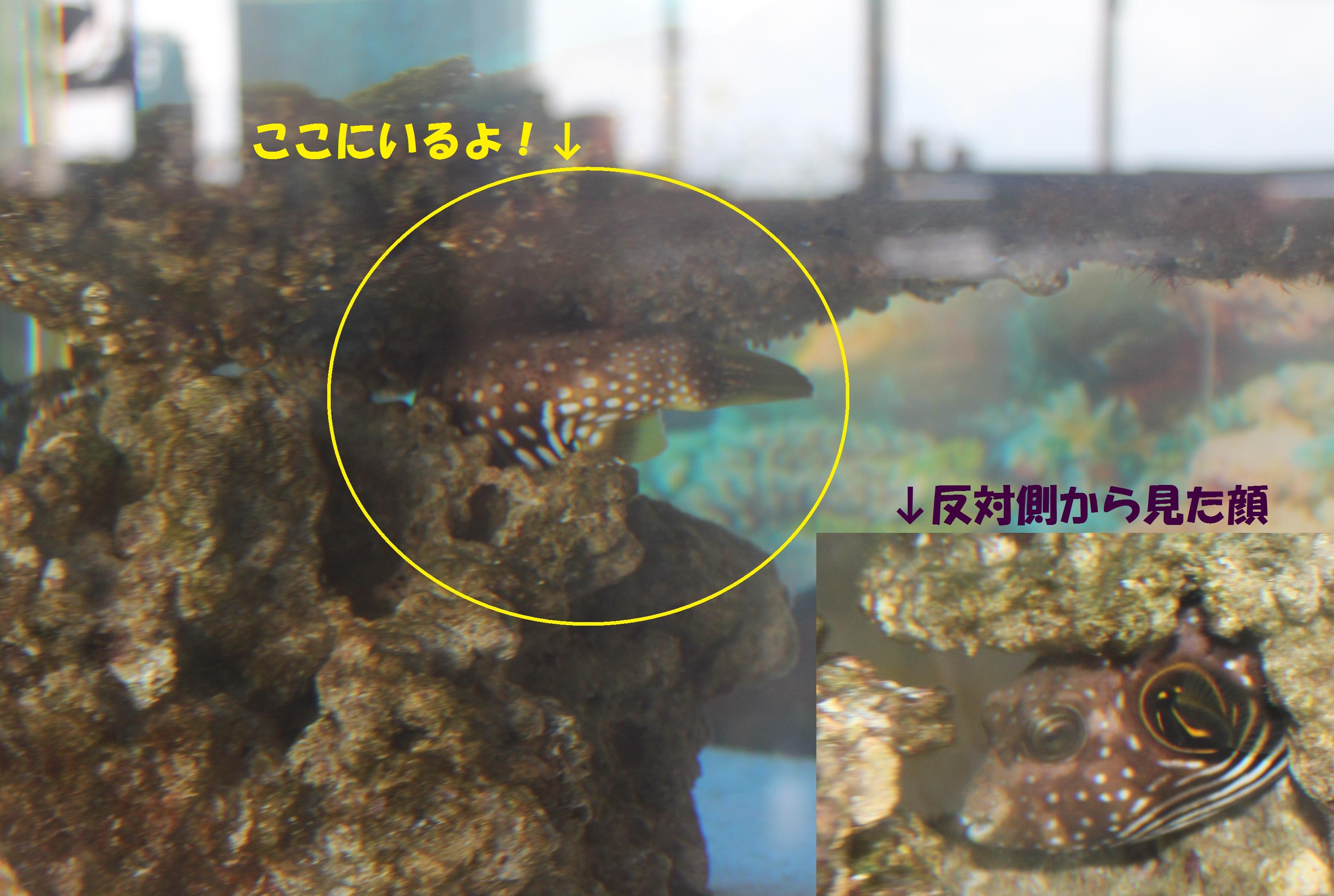 http://miyakojima-kaichukoen.com/blog/upload_images/hugu.png